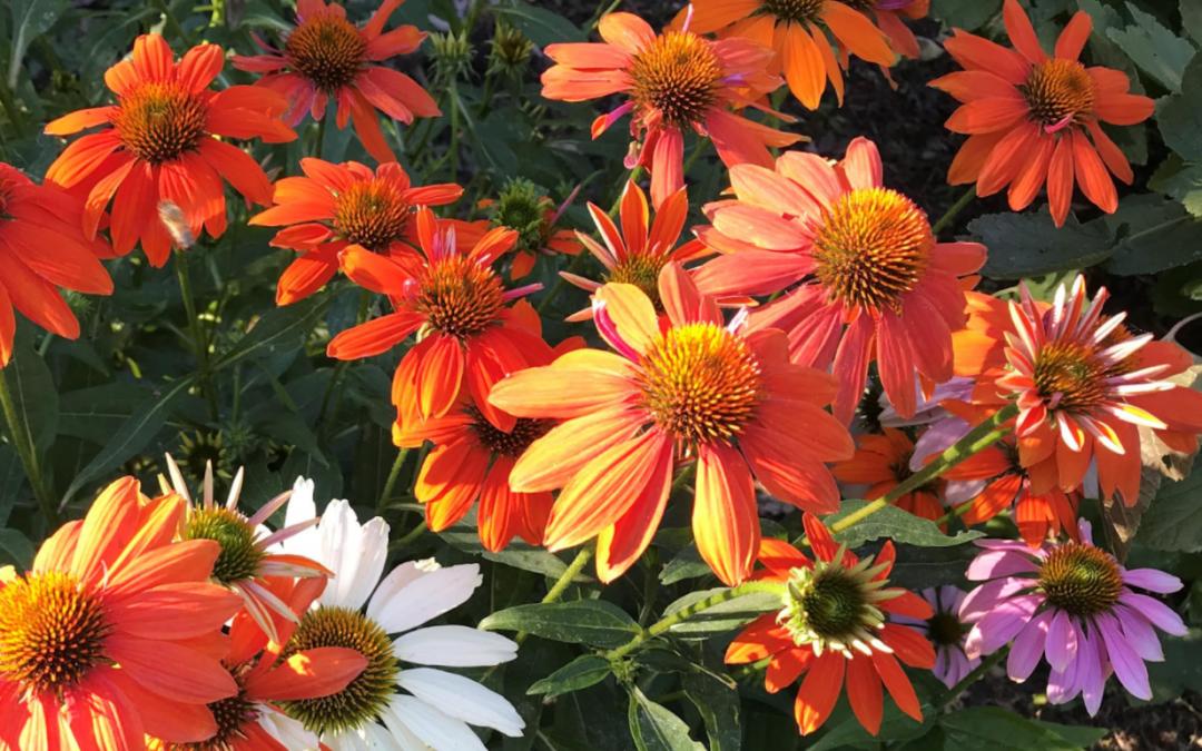 Meet the OFN Flower Farms!